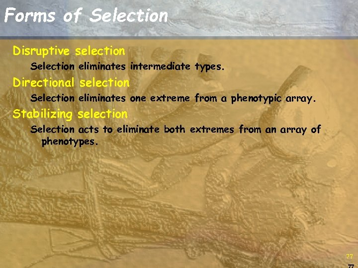 Forms of Selection Disruptive selection Selection eliminates intermediate types. Directional selection Selection eliminates one