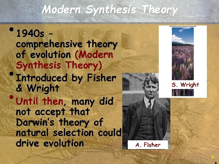 Modern Synthesis Theory • 1940 s – comprehensive theory of evolution (Modern Synthesis Theory)