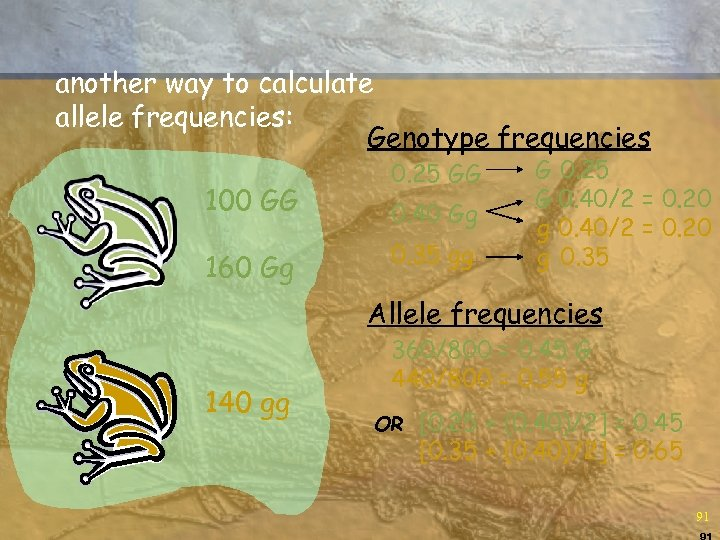 another way to calculate allele frequencies: Genotype frequencies 100 GG 160 Gg 0. 25