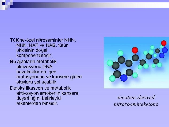 Tütüne-özel nitrosaminler NNN, NNK, NAT ve NAB, tütün bitkisinin doğal komponentleridir. Bu ajanların metabolik