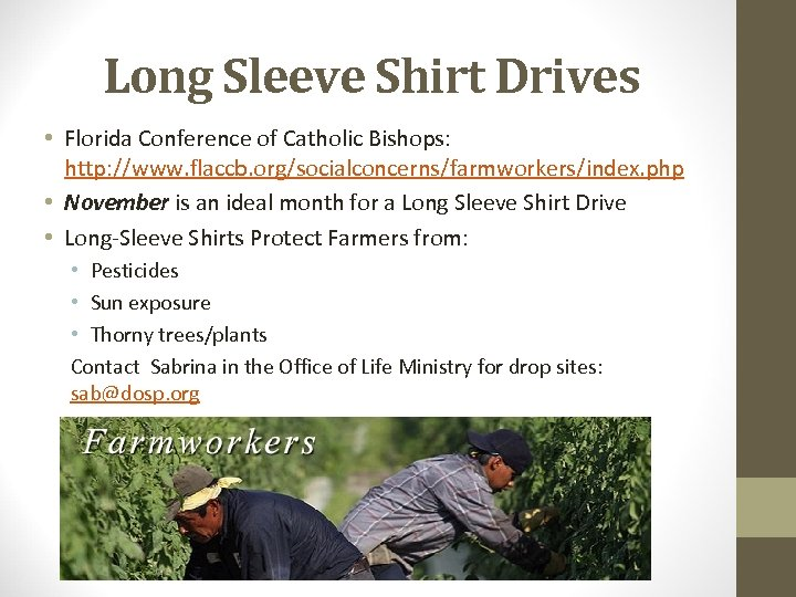 Long Sleeve Shirt Drives • Florida Conference of Catholic Bishops: http: //www. flaccb. org/socialconcerns/farmworkers/index.