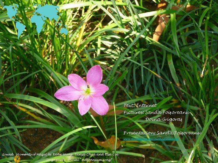 Text: Internet Pictures: Sanda Foişoreanu Doina Grigoraş Presentation: Sanda Foişoreanu www. slideshare. net/michaelasanda Sound
