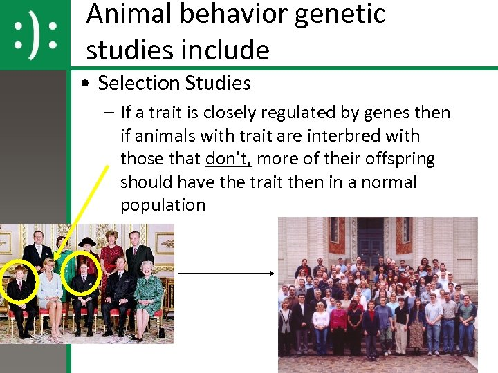 Animal behavior genetic studies include • Selection Studies – If a trait is closely