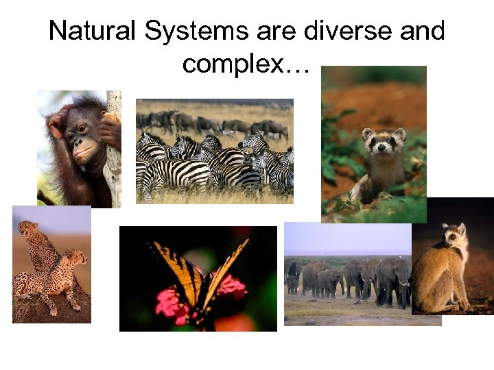 Natural Systems are diverse and complex…