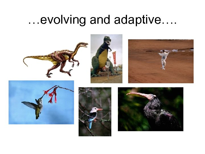 …evolving and adaptive….
