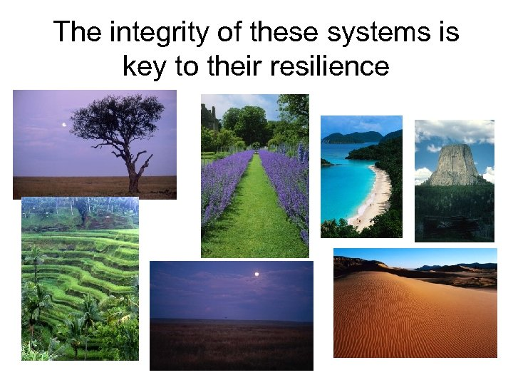 The integrity of these systems is key to their resilience