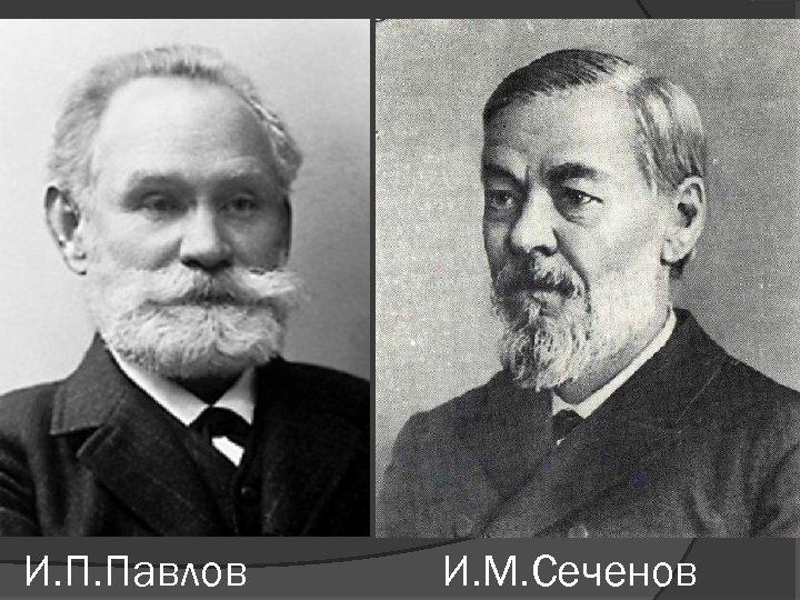 И. П. Павлов И. М. Сеченов