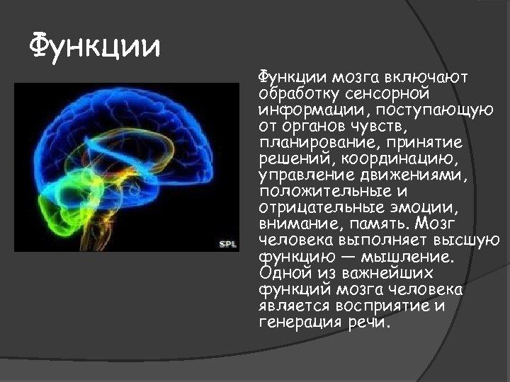 Функции мозга включают обработку сенсорной информации, поступающую от органов чувств, планирование, принятие решений, координацию,