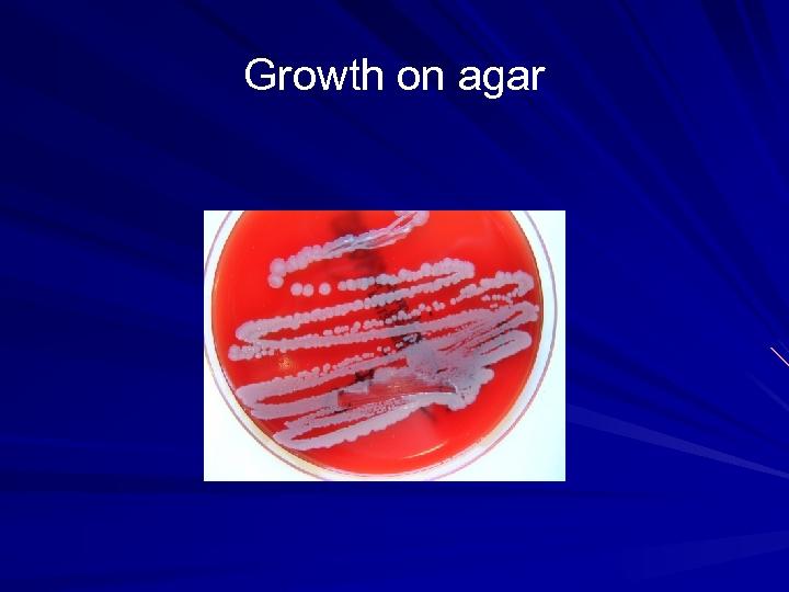 Growth on agar