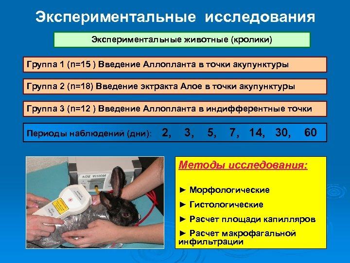 Экспериментальные исследования Экспериментальные животные (кролики) Группа 1 (n=15 ) Введение Аллопланта в точки акупунктуры