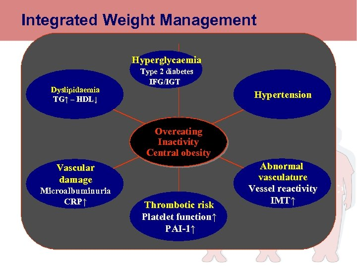 Integrated Weight Management Hyperglycaemia Dyslipidaemia TG↑ – HDL↓ Type 2 diabetes IFG/IGT Weight maintenance