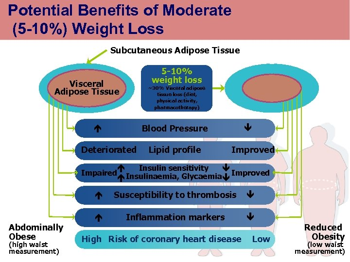 Potential Benefits of Moderate (5 -10%) Weight Loss Subcutaneous Adipose Tissue 5 -10% weight