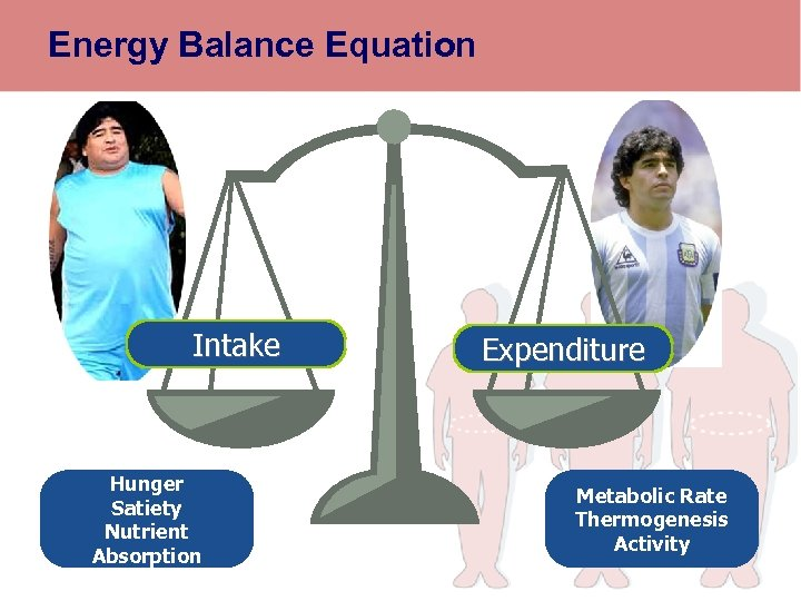 Energy Balance Equation Intake Hunger Satiety Nutrient Absorption Expenditure Metabolic Rate Thermogenesis Activity