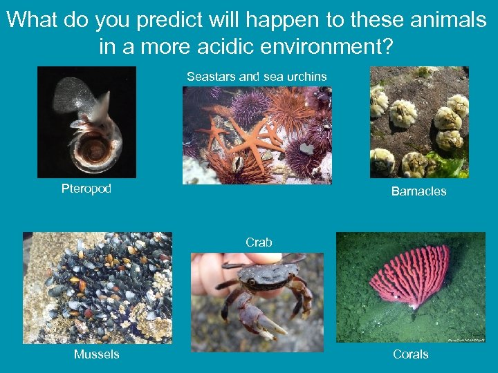 What do you predict will happen to these animals in a more acidic environment?