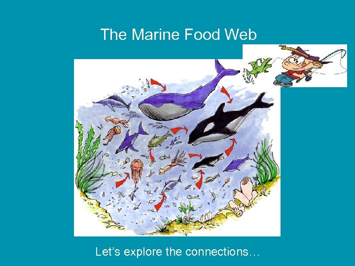 The Marine Food Web Let's explore the connections…