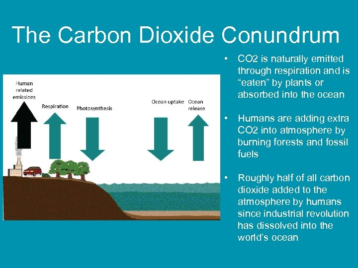 The Carbon Dioxide Conundrum • CO 2 is naturally emitted through respiration and is