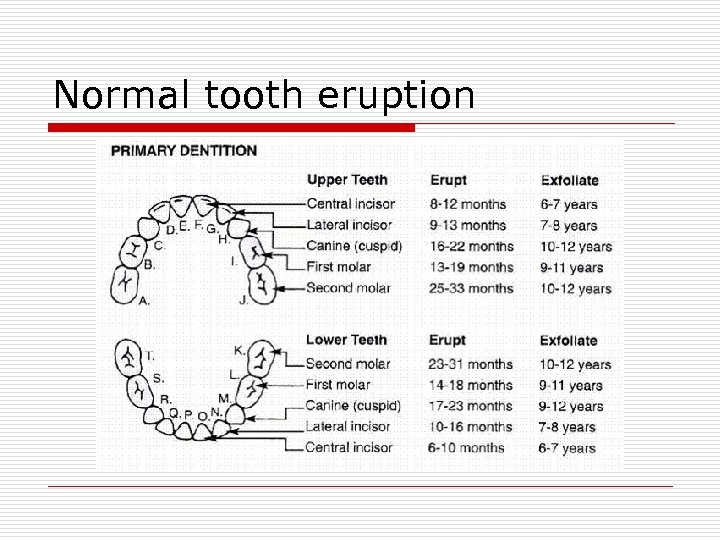Normal tooth eruption