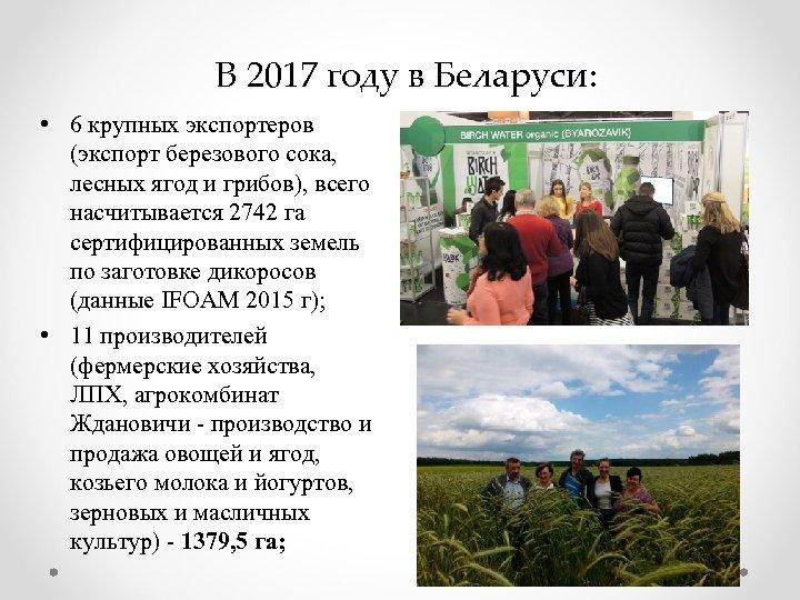 В 2017 году в Беларуси: • 6 крупных экспортеров (экспорт березового сока, лесных ягод