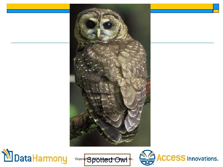 Spotted Owl Copyright 2007 Access Innovations, Inc.