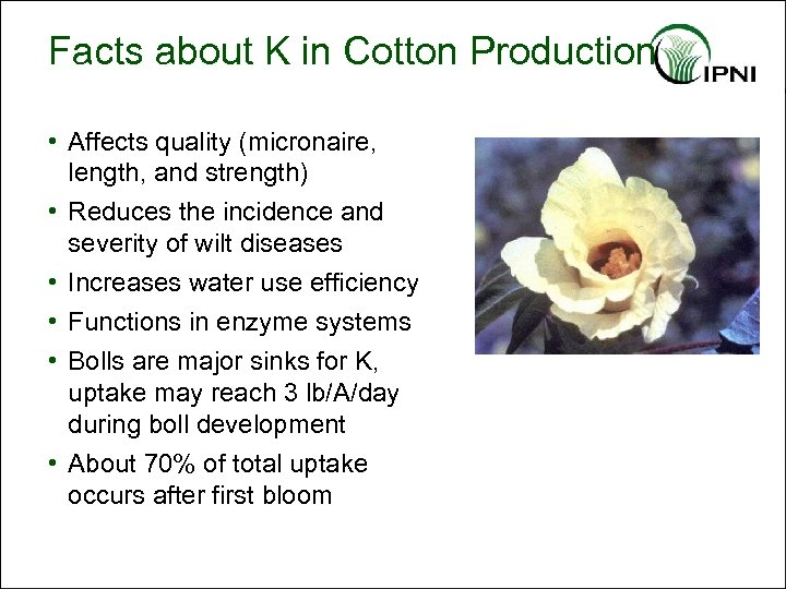 Facts about K in Cotton Production • Affects quality (micronaire, length, and strength) •
