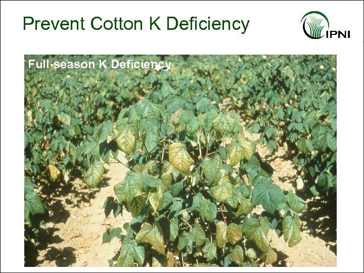 Prevent Cotton K Deficiency Full-season K Deficiency