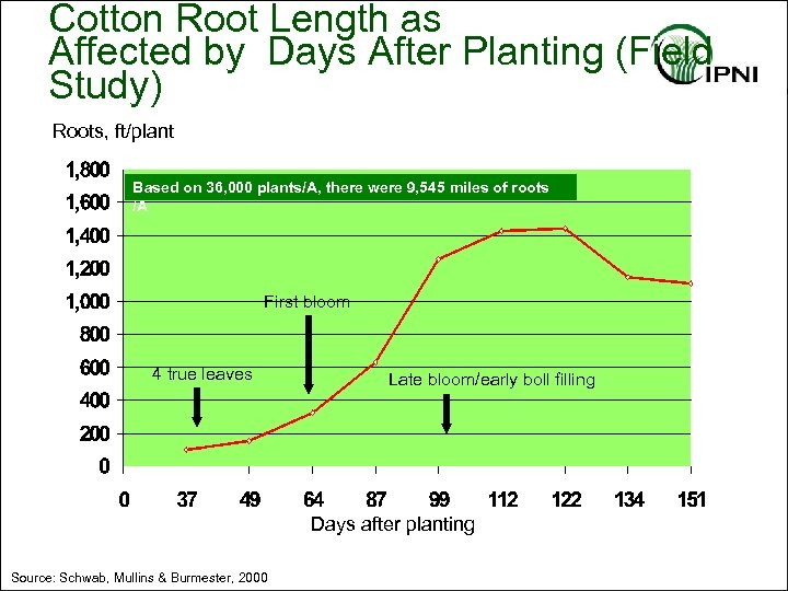 Cotton Root Length as Affected by Days After Planting (Field Study) Roots, ft/plant Based