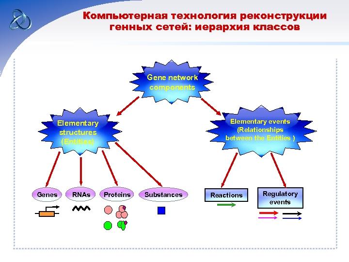 Компьютерная технология реконструкции генных сетей: иерархия классов Gene network components Elementary events (Relationships between