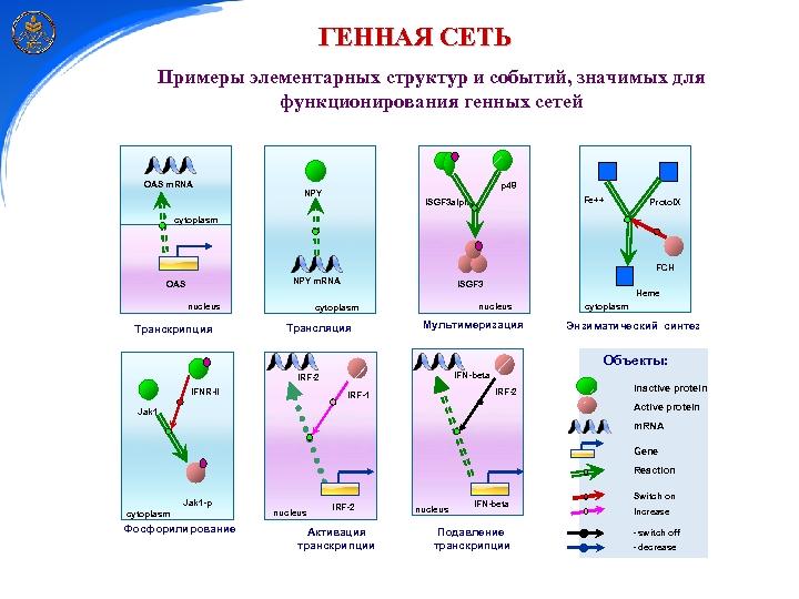 ГЕННАЯ СЕТЬ Примеры элементарных структур и событий, значимых для функционирования генных сетей OAS m.