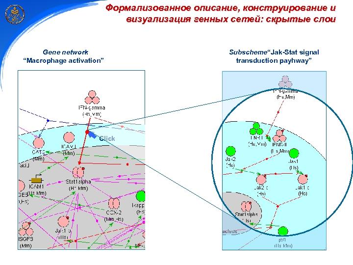 """Формализованное описание, конструирование и визуализация генных сетей: скрытые слои Gene network """"Macrophage activation"""" Click"""