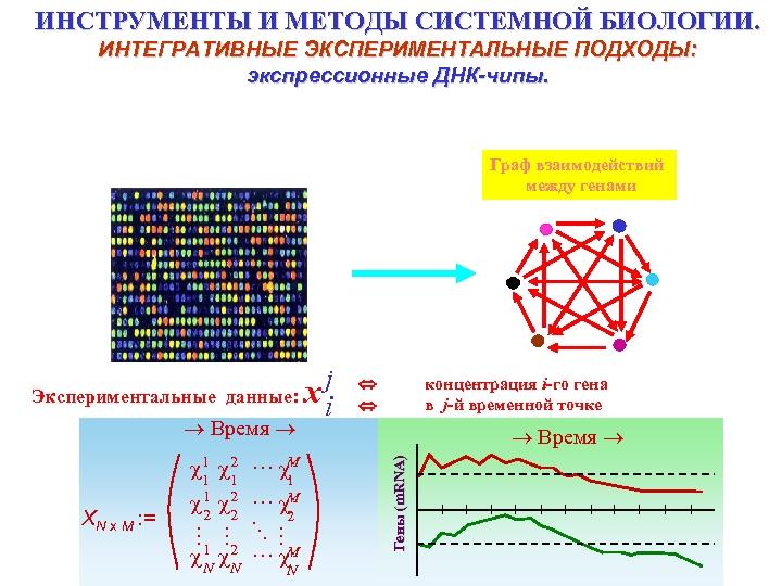 ИНСТРУМЕНТЫ И МЕТОДЫ СИСТЕМНОЙ БИОЛОГИИ. ИНТЕГРАТИВНЫЕ ЭКСПЕРИМЕНТАЛЬНЫЕ ПОДХОДЫ: экспрессионные ДНК-чипы. Граф взаимодействий между генами