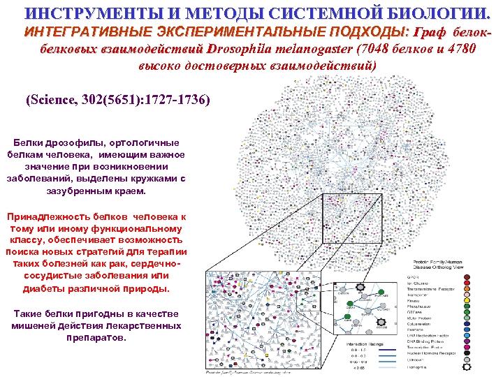ИНСТРУМЕНТЫ И МЕТОДЫ СИСТЕМНОЙ БИОЛОГИИ. ИНТЕГРАТИВНЫЕ ЭКСПЕРИМЕНТАЛЬНЫЕ ПОДХОДЫ: Граф белокбелковых взаимодействий Drosophila melanogaster (7048