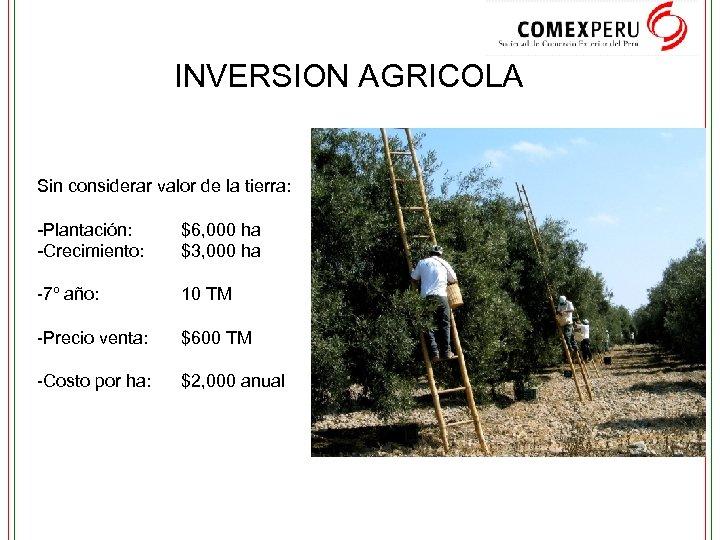 INVERSION AGRICOLA Sin considerar valor de la tierra: -Plantación: -Crecimiento: $6, 000 ha $3,