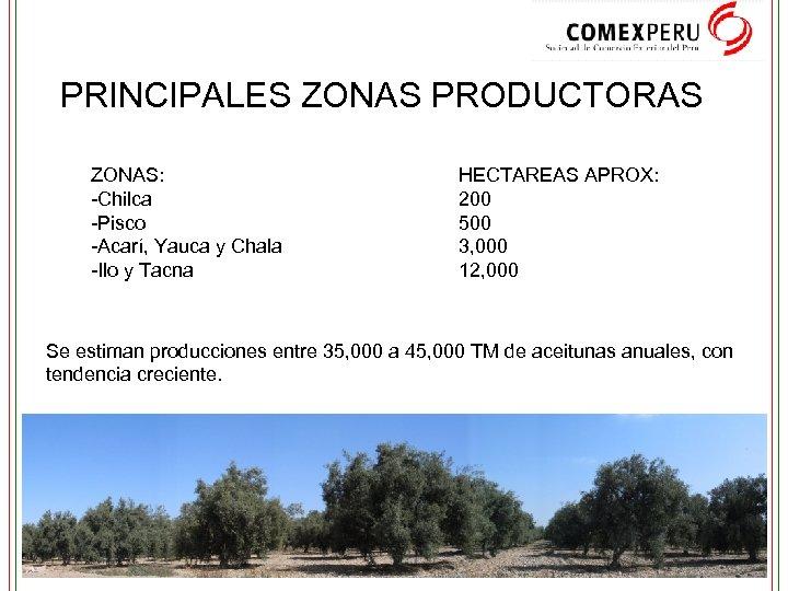 PRINCIPALES ZONAS PRODUCTORAS ZONAS: -Chilca -Pisco -Acarí, Yauca y Chala -Ilo y Tacna HECTAREAS