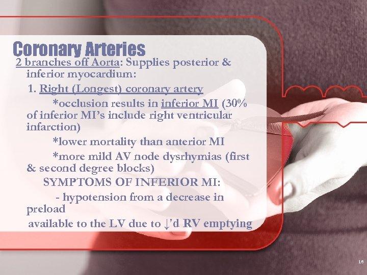 Coronary Arteries 2 branches off Aorta: Supplies posterior & inferior myocardium: 1. Right (Longest)