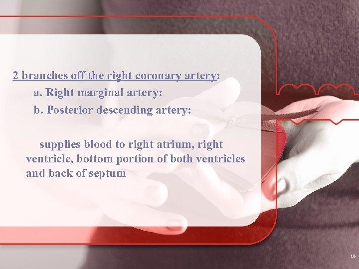 2 branches off the right coronary artery: a. Right marginal artery: b. Posterior descending