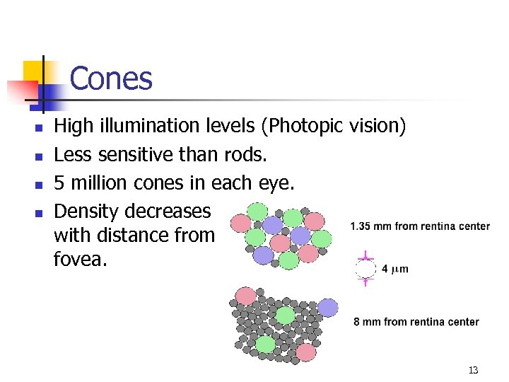 Cones n n High illumination levels (Photopic vision) Less sensitive than rods. 5 million
