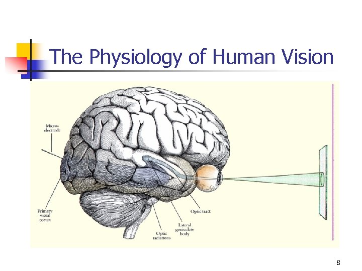 The Physiology of Human Vision 8