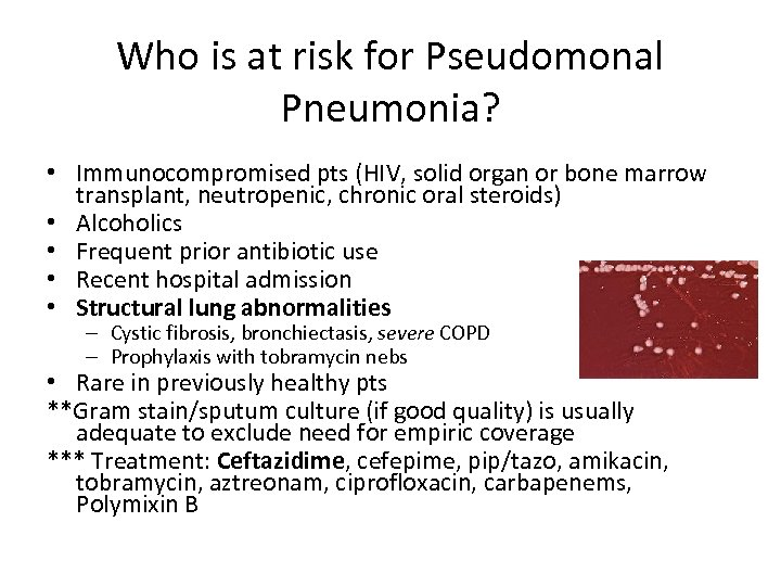 Who is at risk for Pseudomonal Pneumonia? • Immunocompromised pts (HIV, solid organ or