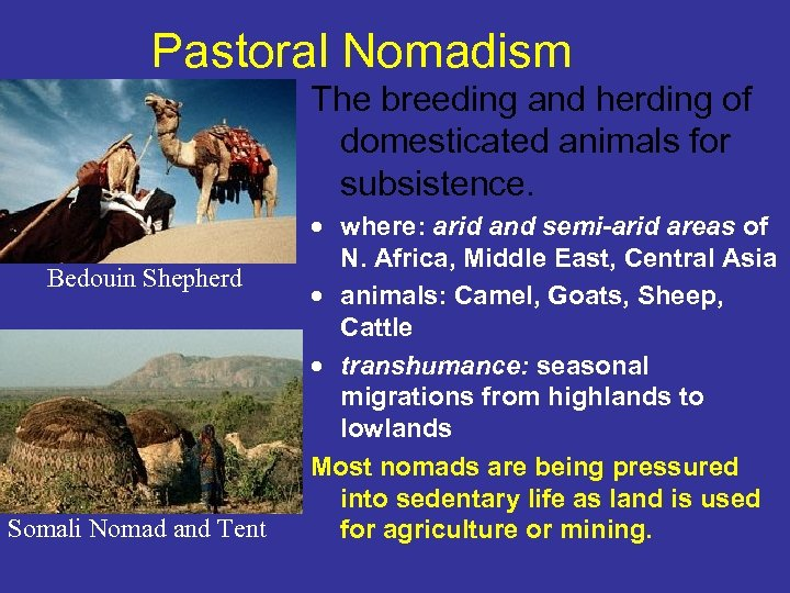 Pastoral Nomadism The breeding and herding of domesticated animals for subsistence. Bedouin Shepherd Somali