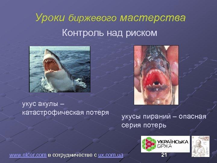 Уроки биржевого мастерства Контроль над риском укус акулы – катастрофическая потеря укусы пираний –