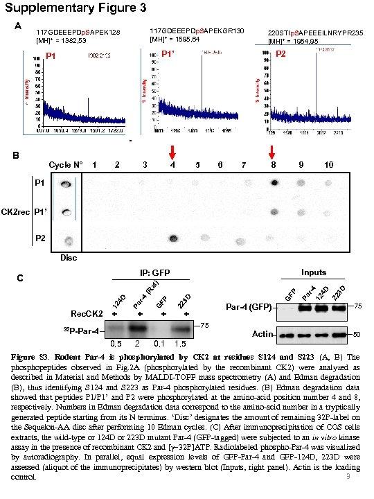 Supplementary Figure 3 A 117 GDEEEPDp. SAPEKGR 130 [MH]+ = 1595, 64 117 GDEEEPDp.