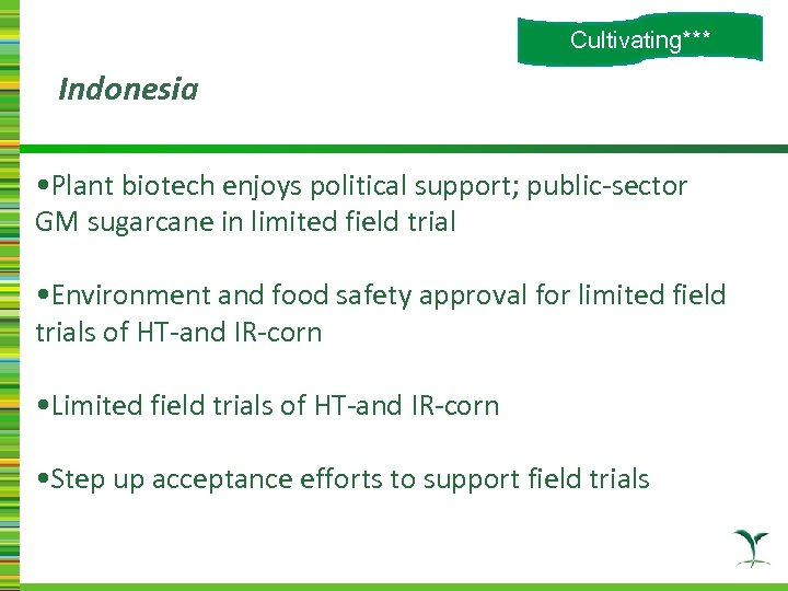 Cultivating*** Indonesia • Plant biotech enjoys political support; public-sector GM sugarcane in limited field