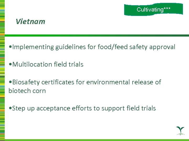 Cultivating*** Vietnam • Implementing guidelines for food/feed safety approval • Multilocation field trials •