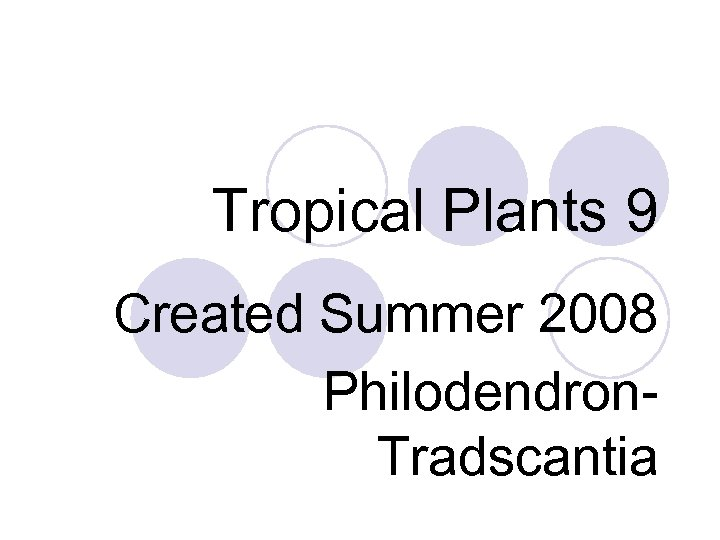 Tropical Plants 9 Created Summer 2008 Philodendron. Tradscantia