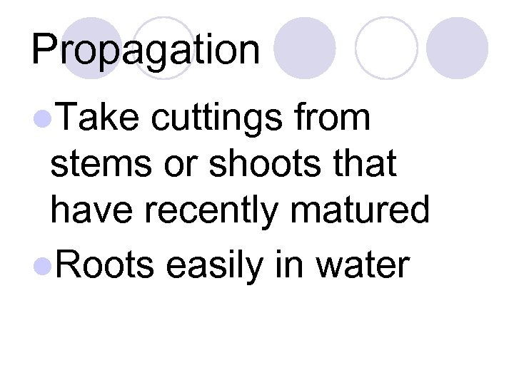 Propagation l. Take cuttings from stems or shoots that have recently matured l. Roots