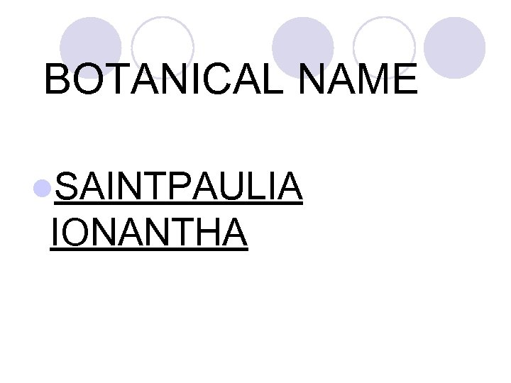 BOTANICAL NAME l. SAINTPAULIA IONANTHA
