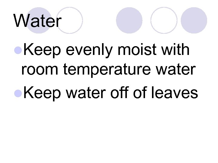 Water l. Keep evenly moist with room temperature water l. Keep water off of