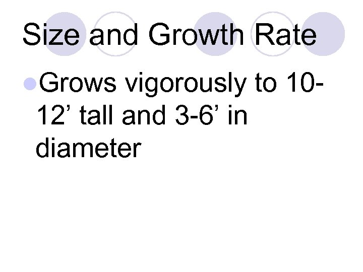 Size and Growth Rate l. Grows vigorously to 1012' tall and 3 -6' in