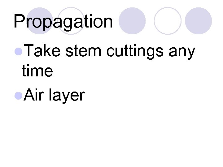 Propagation l. Take stem cuttings any time l. Air layer