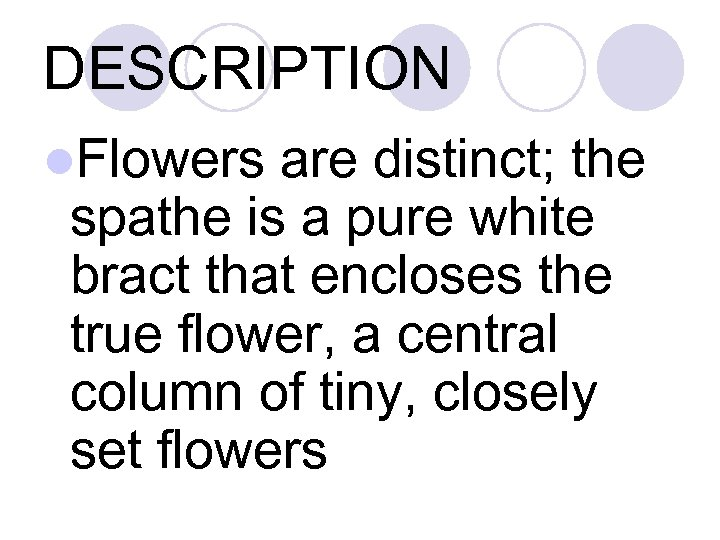 DESCRIPTION l. Flowers are distinct; the spathe is a pure white bract that encloses